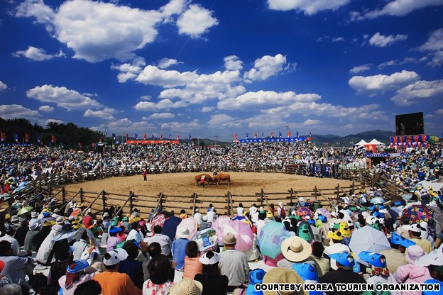 Cheongdo Bull Fighting Festival (청도 소싸움 축제)