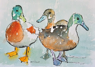 Ducks painting ink and watercolour