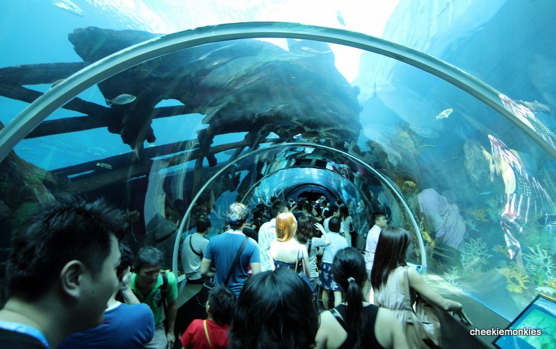 aquarium near me