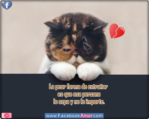 Frases de tristeza desamor para compartir en facebook