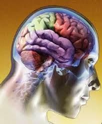 Definição Sistema Nervoso