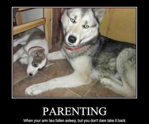 Funny Dogs Pictures With Captions