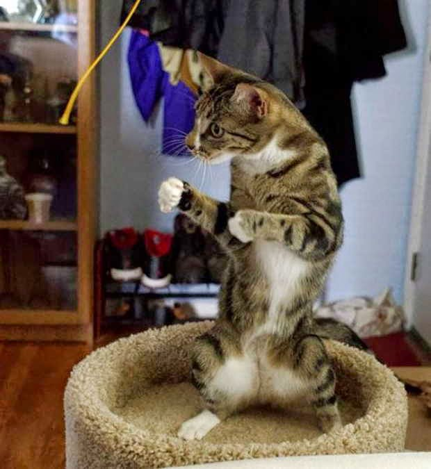 Funny cats - part 153, funny cat photo, best cat picture, cute cats