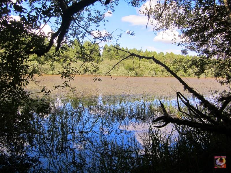 Laguna de Enmedio o de Cornón