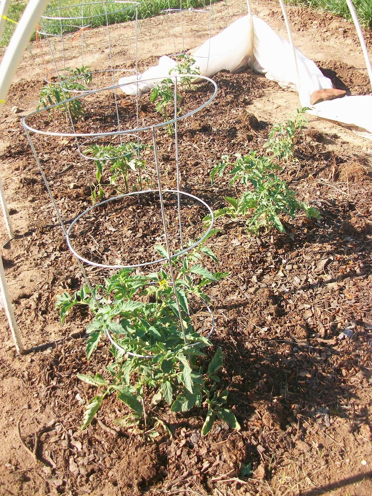 Homesteading Wife: Great Garden Soil