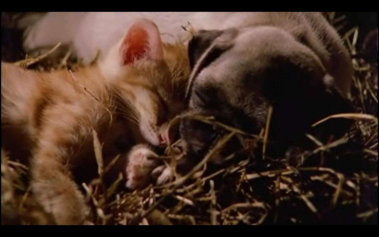 Life Between Frames: Film Appreciation - Big Barnyard, Big ...