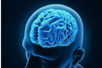 Apa Sebenarnya Perbedaan Otak Kanan dan Kiri?