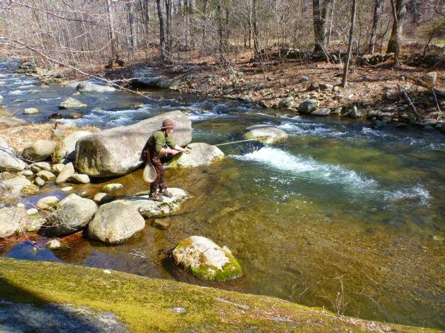 The Life Amphibious Shenandoah National Park Flyfishing