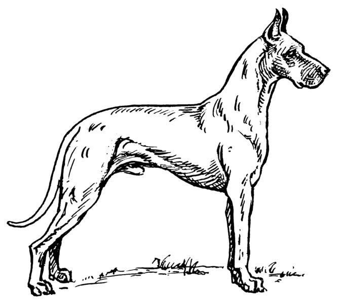 Perro para imprimir