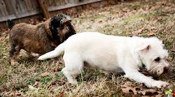 The Fur Babies