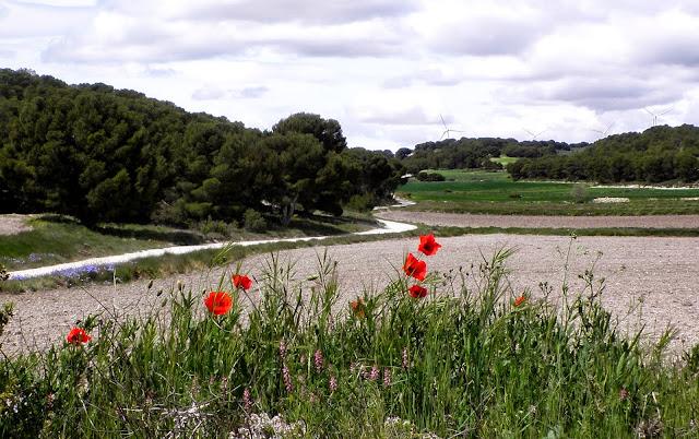 Rutas de naturaleza en Fuendetodos