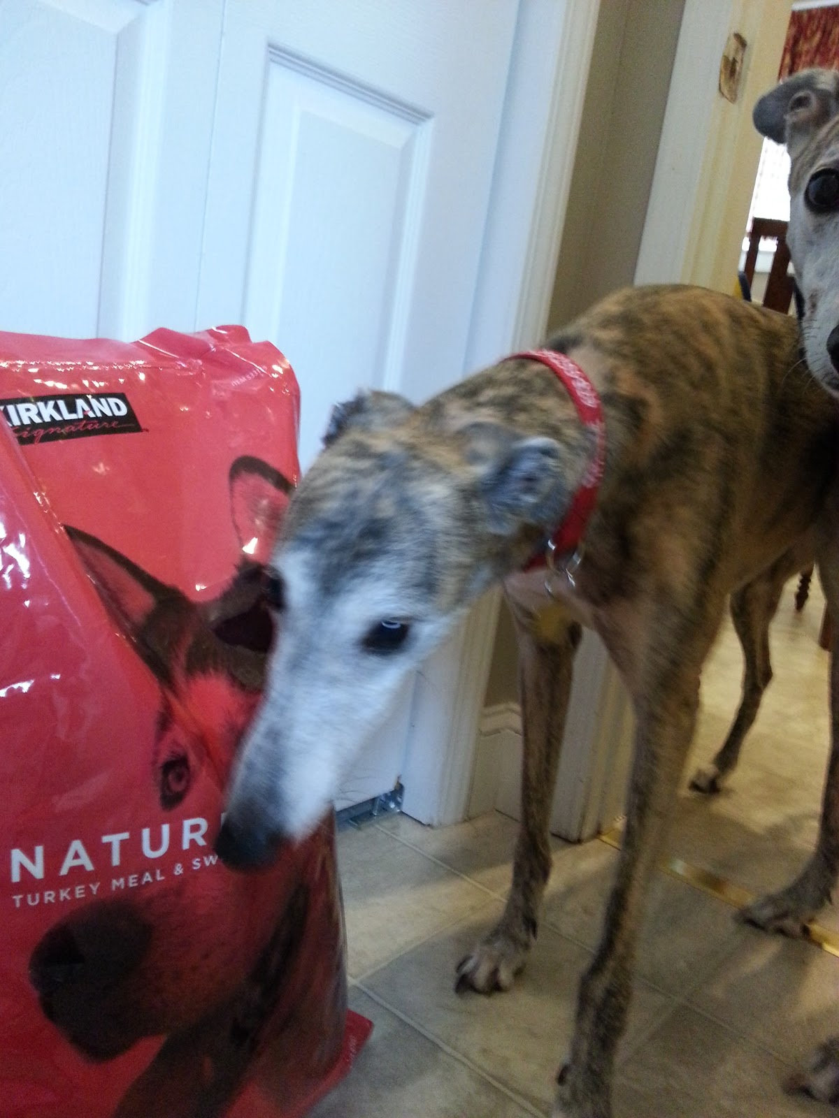 Nutro Dog Food Greyhounds