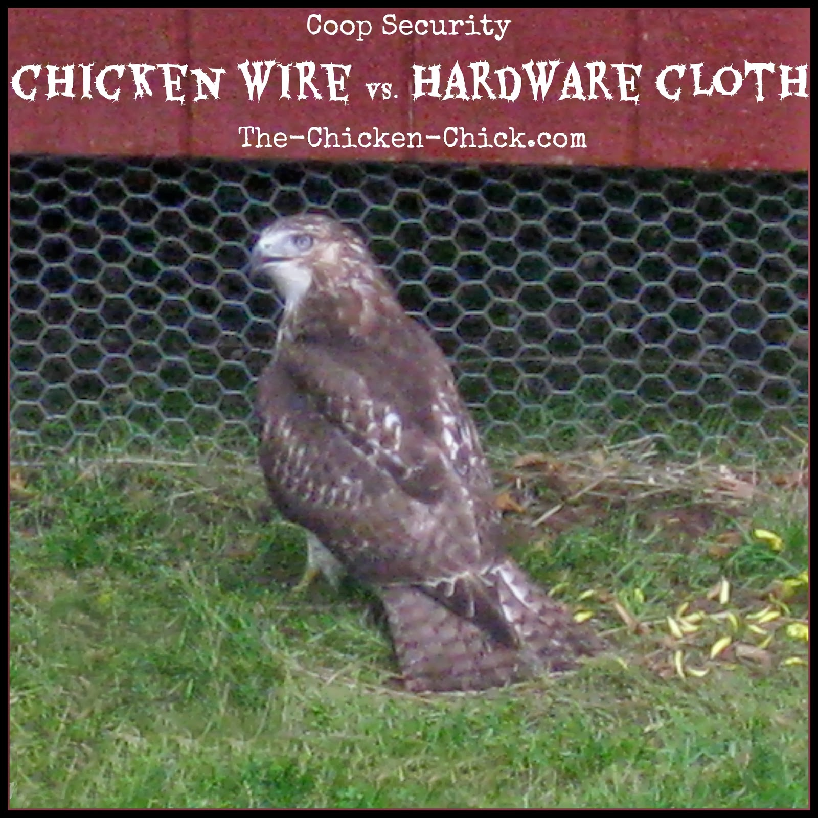 Coop security, the differences between hardware cloth and chicken wire