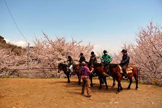 乗馬をしながら桜を眺めることもできますよ~