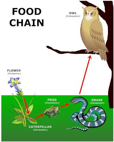 the food chain by - photo #42