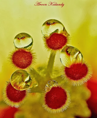 water drop macro flower photography