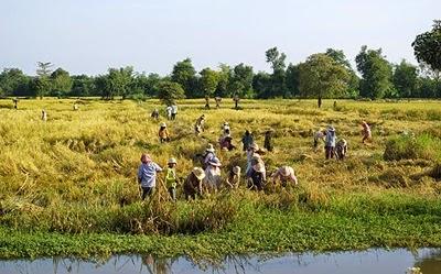 Kamboçya Köylüleri