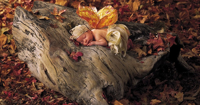 Anne Geddes Babies Images. | Oh My Baby!