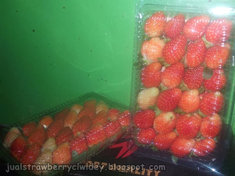 jual strawberry grade b