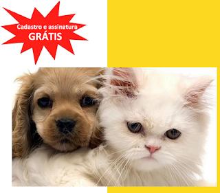 http://www.petboxbrasil.com.br/
