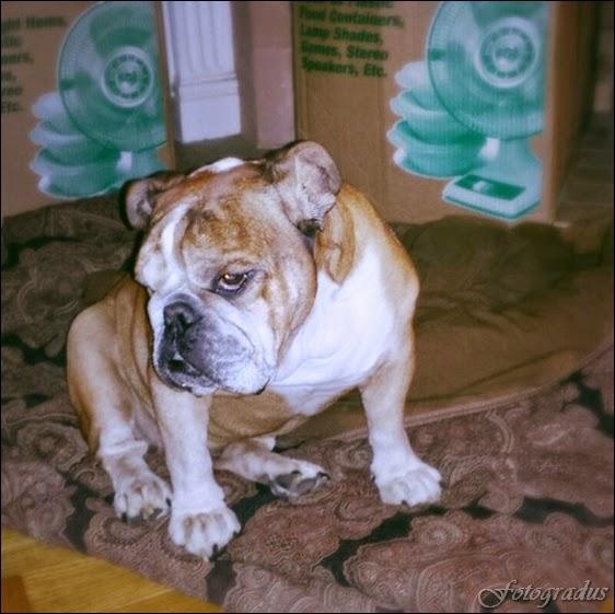 Собака - друг человека! (35 фото)