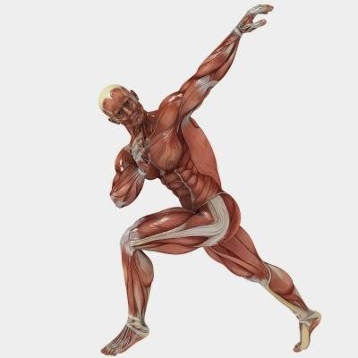 فوائد الواي بروتين لزيادة العضلات