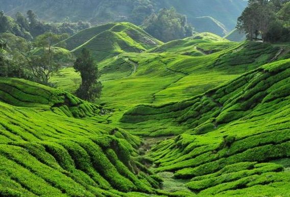 ecotourism in malaysia essay