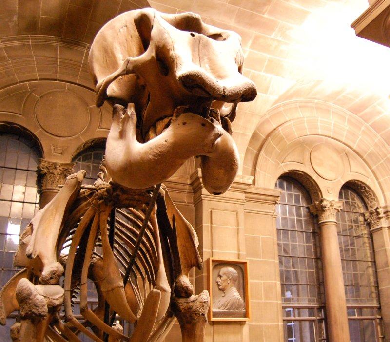 Scotland For The Senses Inside Edinburgh Universitys Anatomy Theatre