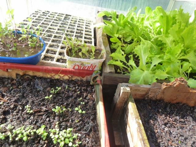 De todo un poco huerta en casa tipos de siembra for Pasos para sembrar una planta