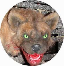 The Animal Blog: Hyena Facts