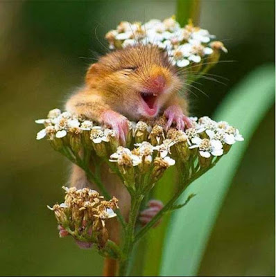 baby-squirrel-on-the-flower