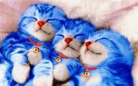 Kucing Cantik Lucu Dan Imut Ketawa Lucu