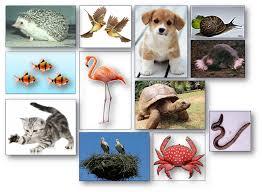 http://bibliotics.blogspot.com.es/2012/05/c-medio-os-animais.html