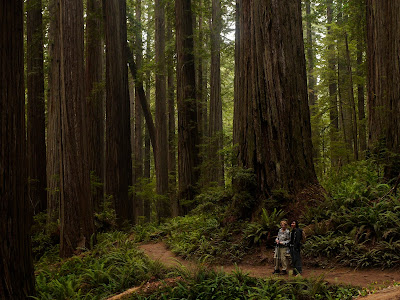 Jedediah smith redwoods forest