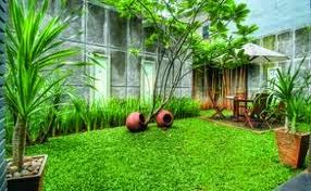 Jasa desain taman rumput | rumput gajah mini | rumput jepang | rumput swis