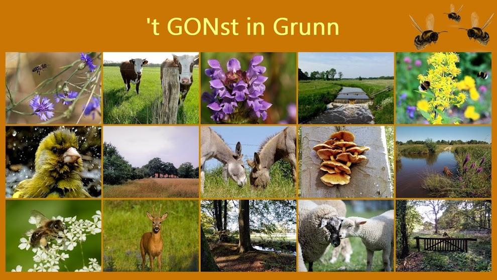 't GONst in Grunn