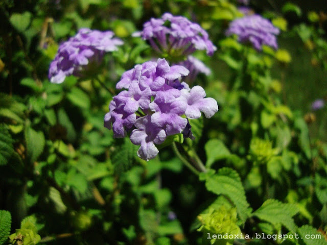 ljubicasto cvijece