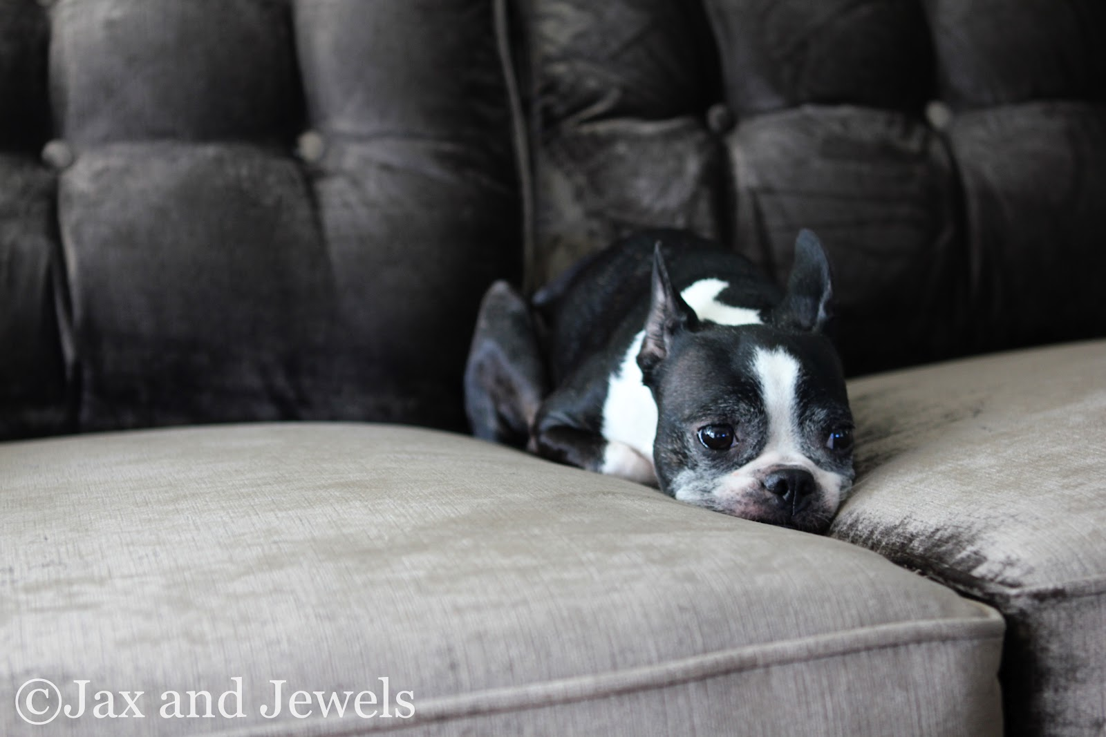 Jax and jewels that don 39 t impress me much for Z furniture coupon code
