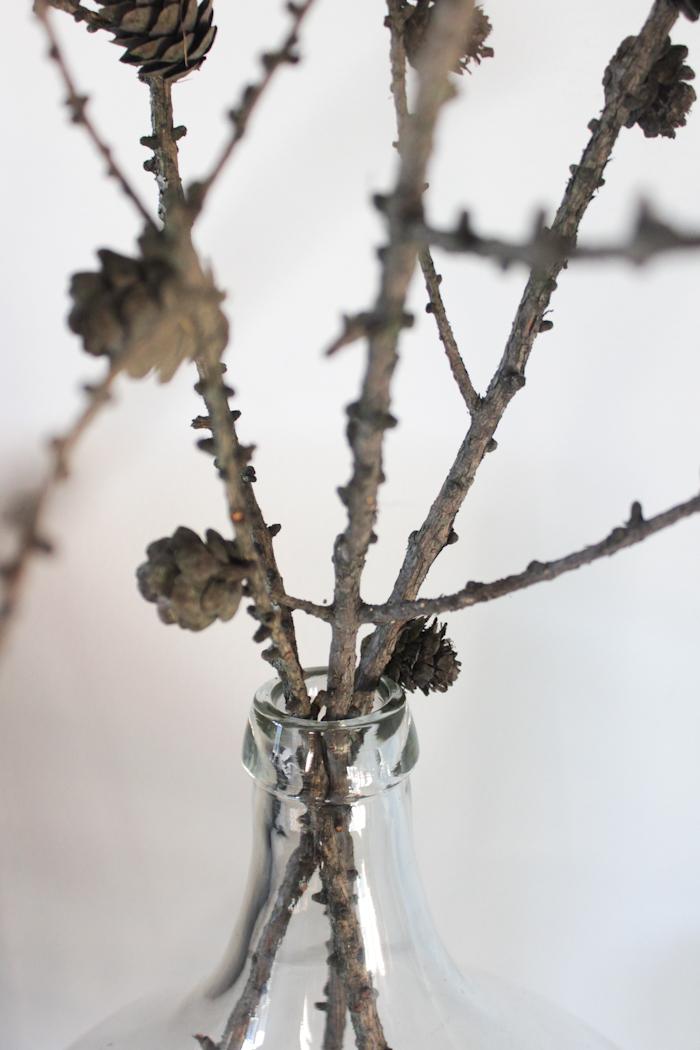Lehtikuusen oksia, Larch branches