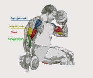 Curl de Bíceps Alterno con Supinación