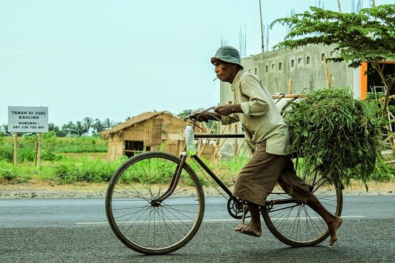 Kakek Bersepeda Membawa Rumput