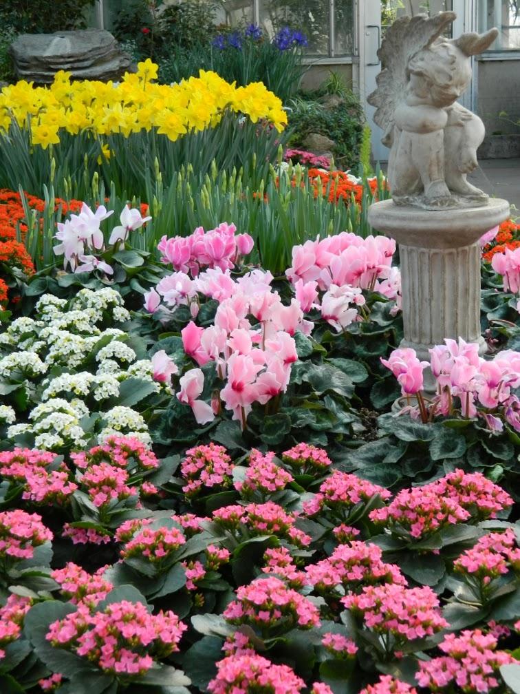 Centennial Park Conservatory Spring Flower Show 2014 cherub statue by garden muses-not another Toronto gardening blog