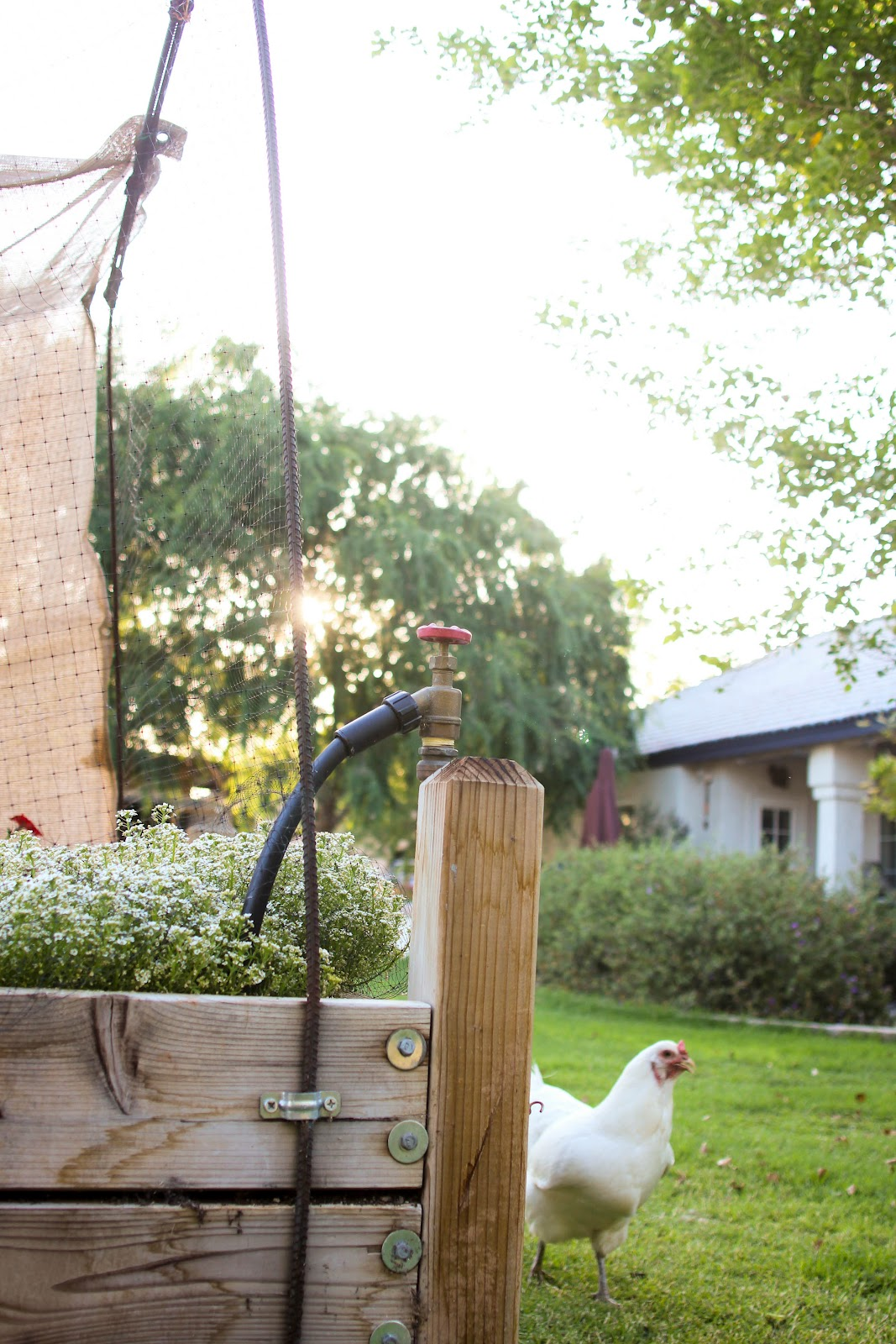 Finley and Oliver: Our Raised Beds