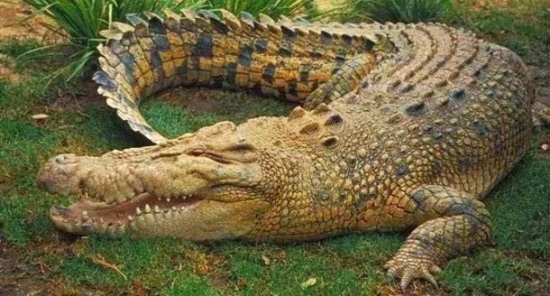 diaforetiko.gr : mychannel Aυτά είναι τα 19 ζώα που σκοτώνουν τους περισσότερους ανθρώπους κάθε χρόνο. Το νούμερο 1 σοκάρει!
