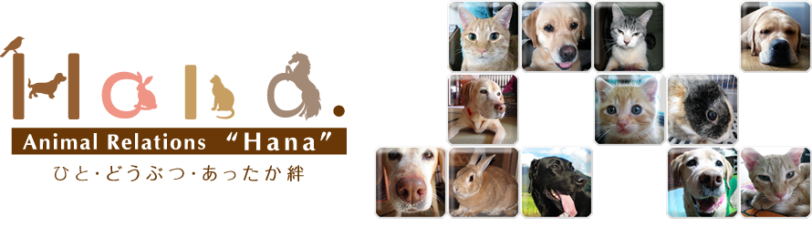 "Animal Relations ""Hana"""
