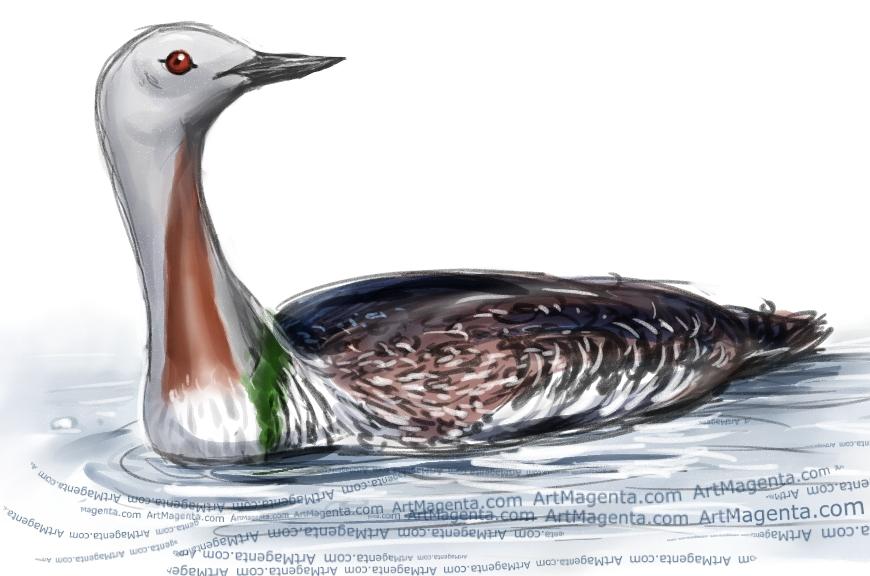 En fågelmålning av en smålom från Artmagentas svenska galleri om fåglar
