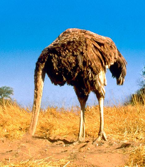 [Image: ostrich_head_in_sand.jpg]