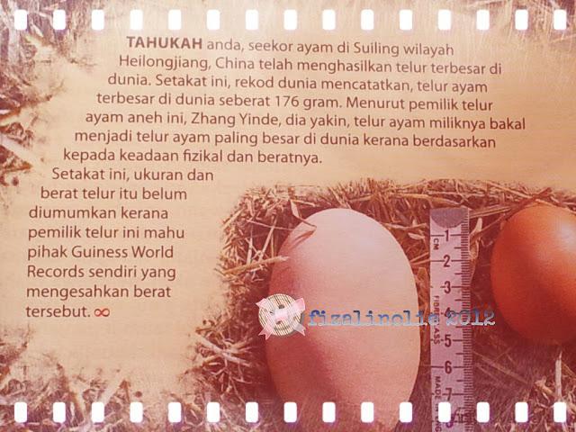 gambar telur, telur terbesar, telur terbesar di dunia,