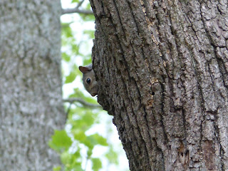 the Ripening, Photo a Day, Squirrel