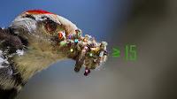 ağaçkakan woodpecker fotoğrafı